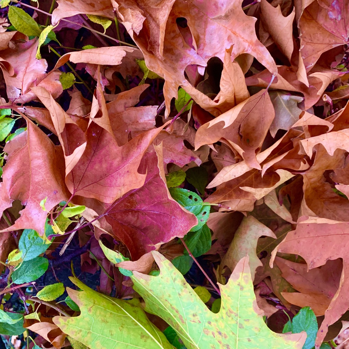 foliage autunnale collina